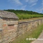 Wine Tourism Guide I:France-Burgundy 法国葡萄酒旅游指南(一)勃艮第
