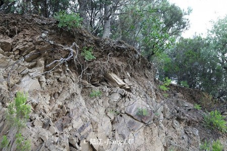 douro Schist 片岩