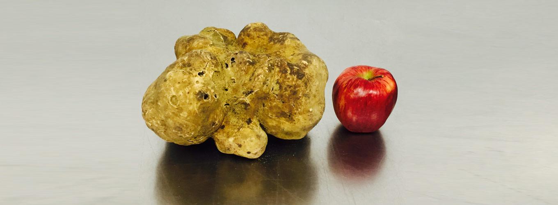 white truffle