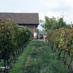 摩尔多瓦-揭开面纱中的葡萄酒大国