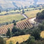 不断拓展中的智利葡萄酒版图