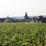 勃艮第葡萄酒行业协会(BIVB)2015年份产区采收官方报告: 一个顶级年份