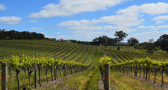 134626_eden-valley-vines-in-barossa-australia-chris-mercer-big