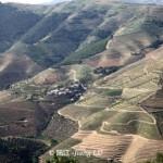 传承之物竞天择-葡萄牙杜罗河产区
