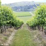 澳大利亚葡萄酒与中国市场