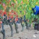 尤金家族,西班牙葡萄酒先锋代表