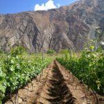 从米歇尔罗兰对中国葡萄酒的建议,到国内首个单一葡萄园规程发布